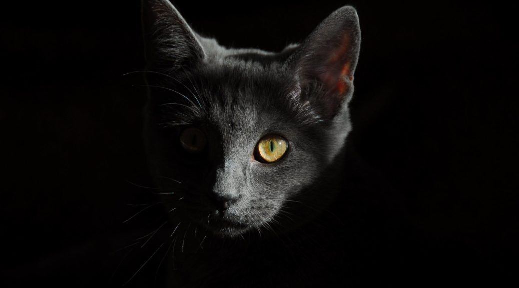 friday 13 black cat