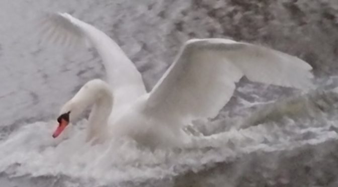 Nasdaq swan landing in the water getting cold feet ?